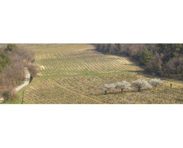 Domaine Barbanot - Rhone