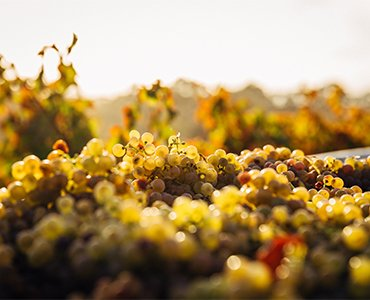 Mousserende vine