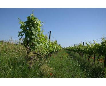 Andert-Wein - Burgenland